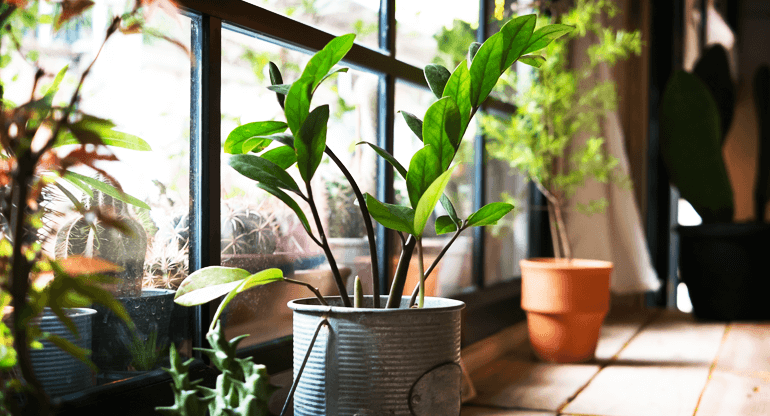 Did You Know That Window Film Helps House Plants?
